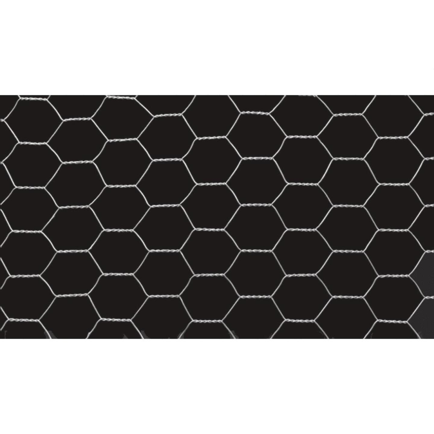 1/2 In. x 48 In. H. x 25 Ft. L. Hexagonal Wire Poultry Netting Image 2